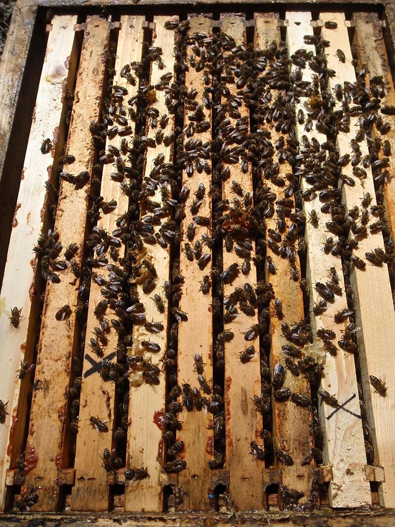 Prodej Vyzimovaných Včelstev