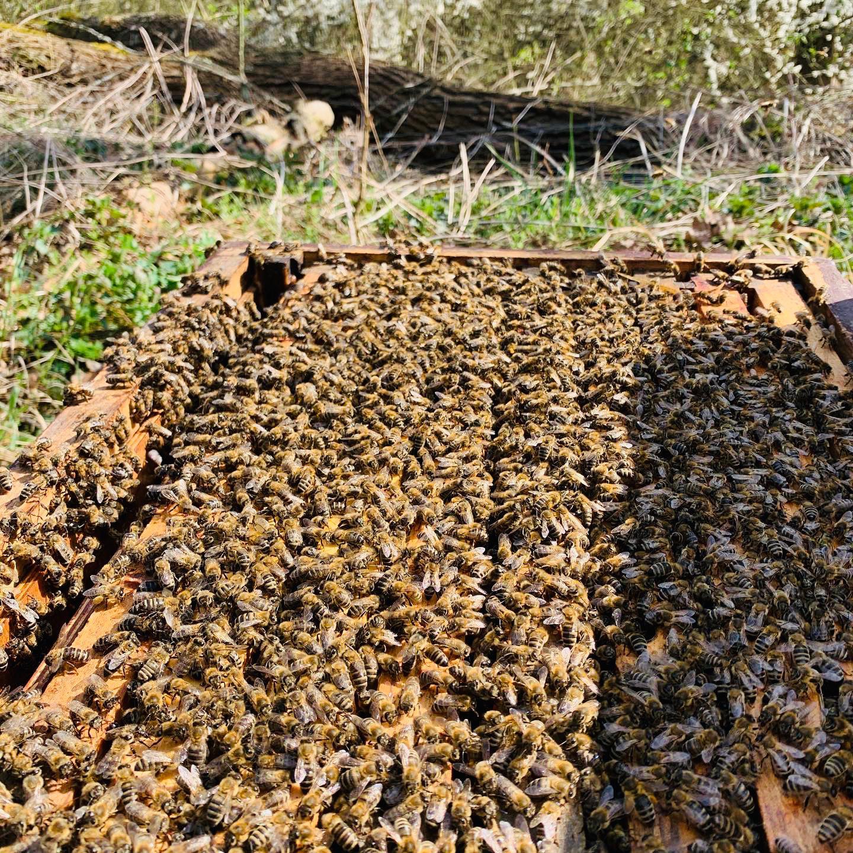 Vyzimované Včelstvo Na 10 Rámcích 448x 232mm